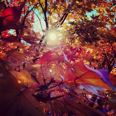 あと少しの秋