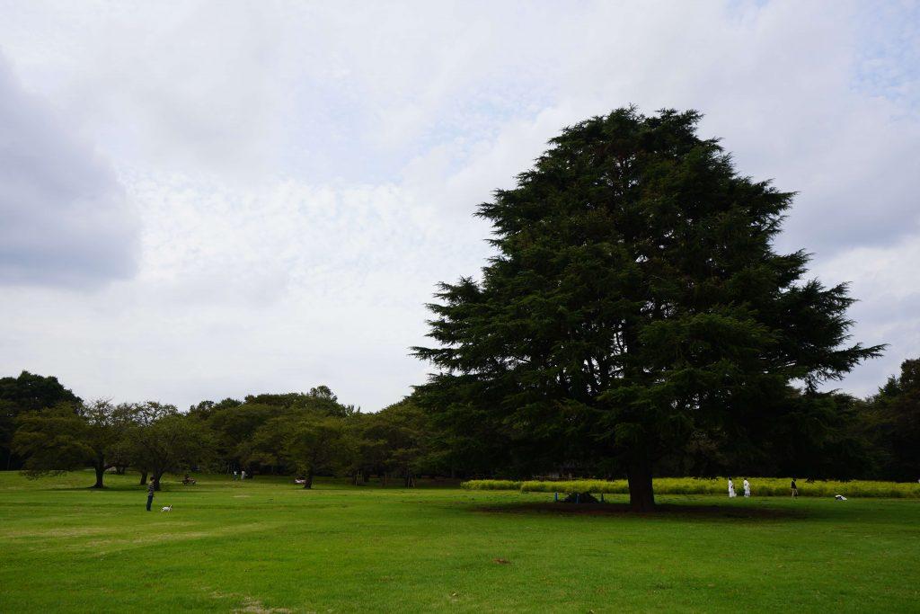 公園の木と散歩中の人たち